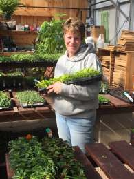 RONDA - RONDA - a Michigan native and a MICHIGAN fan, Ronda came to JJ's Acres in 2008 after many successful years at a neighboring florist. Her overall knowledge of plants for the garden and home and her centerpiece and wreath designing are a true talent.