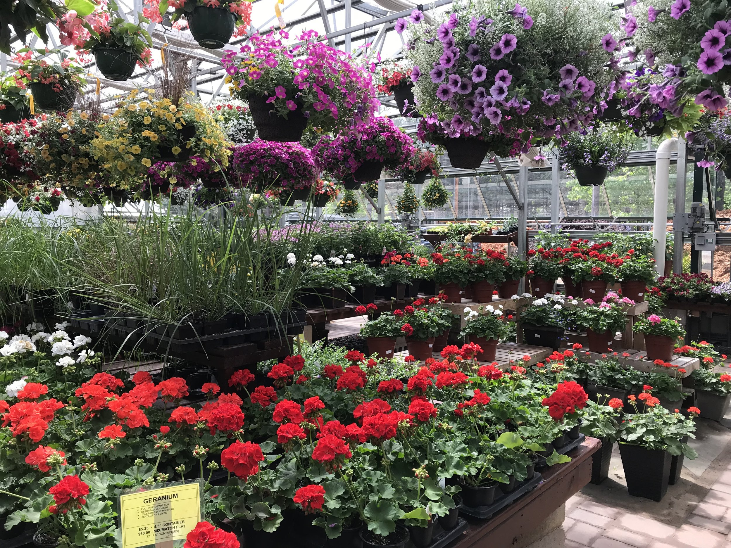 """Springtime """"annuals"""" in our greenhouse"""