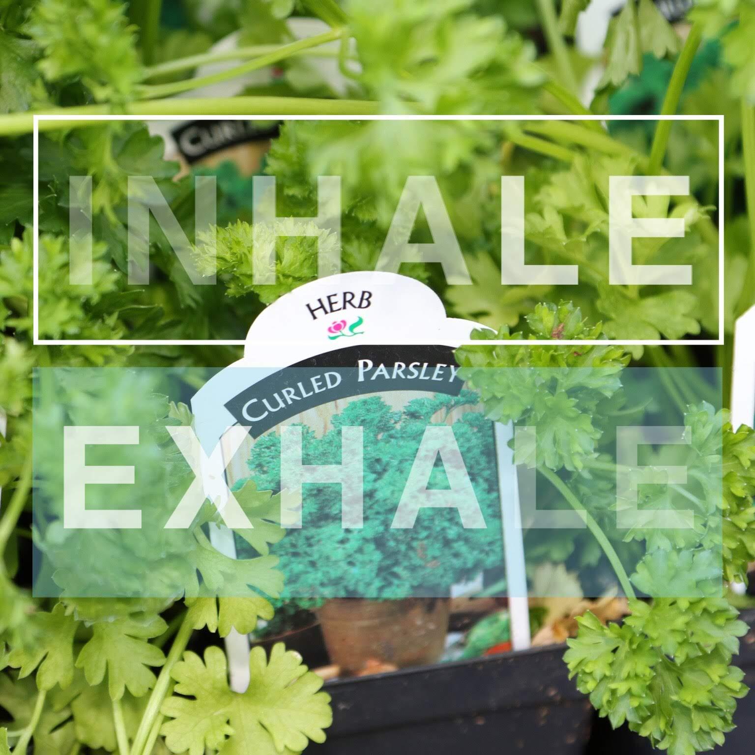 Herbs galore - basil, parsley, thyme, rosemary, cilantro, chives, tarragon