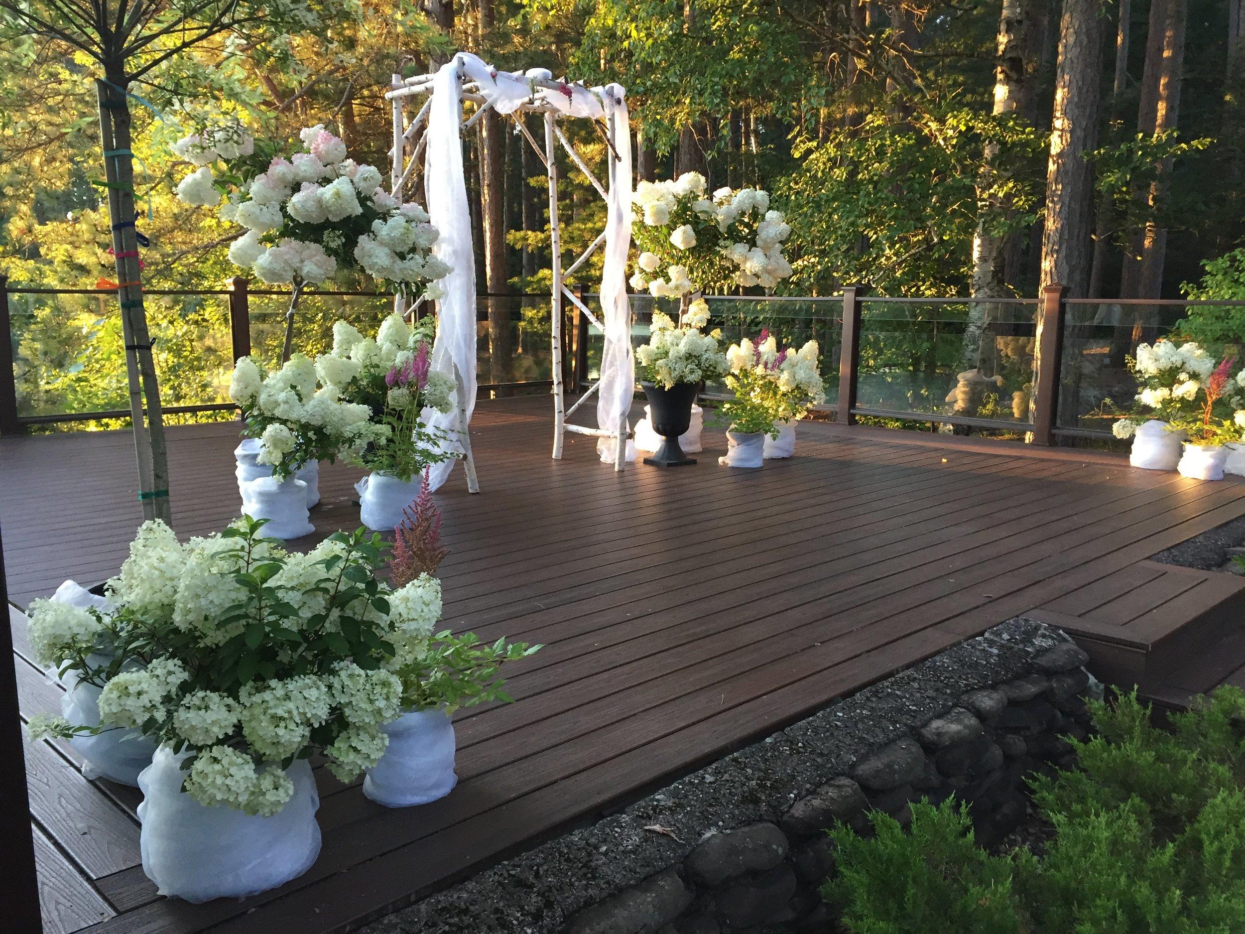 "Wedding plant ""rentals"""