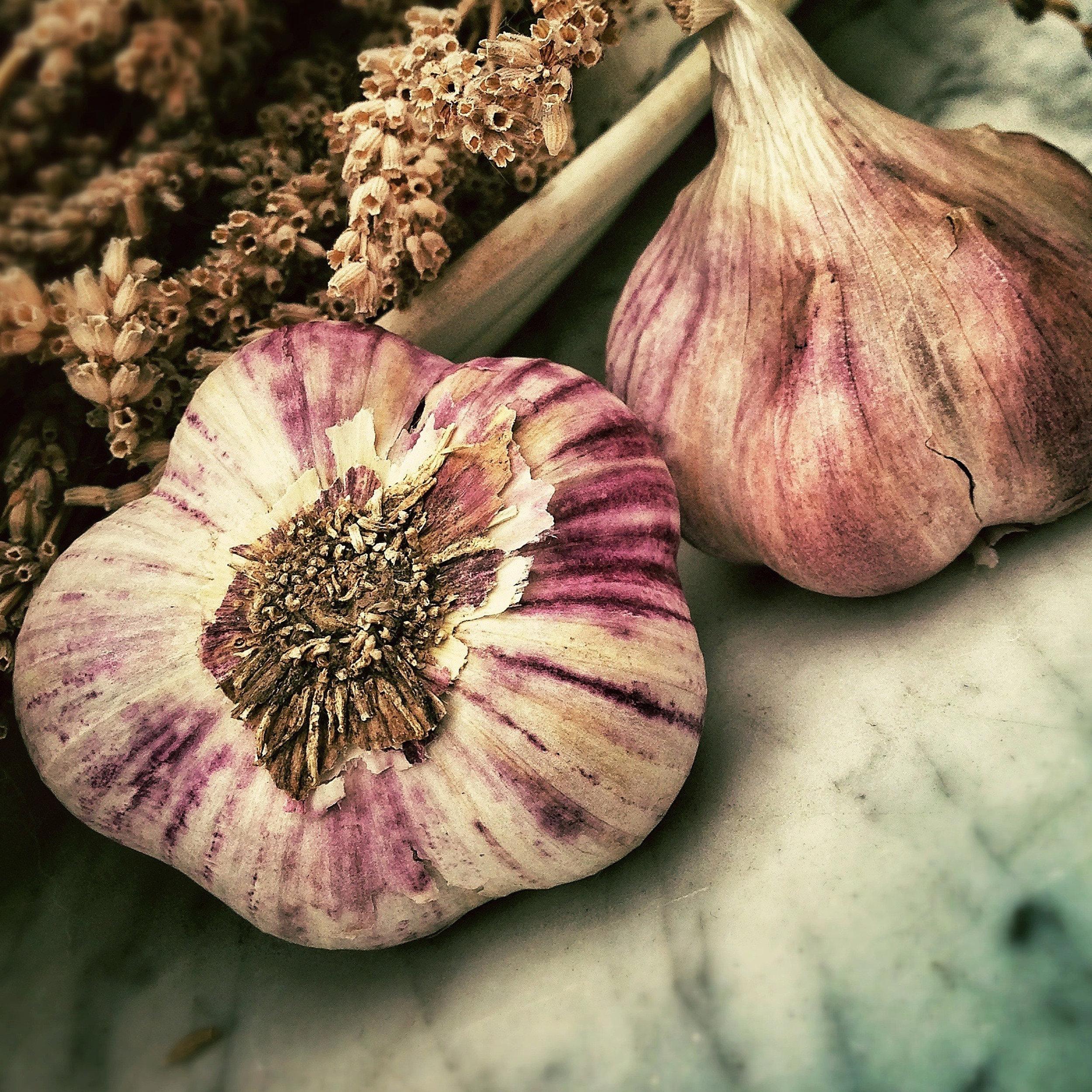 garlic-lobostudio-hamburg-33674-unsplash-crop.jpg