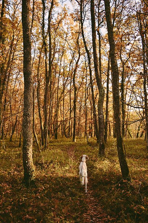 Woods autumn-2.jpg
