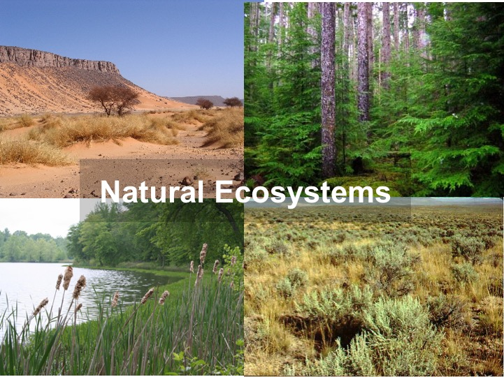 Natural-ecosystems.jpg