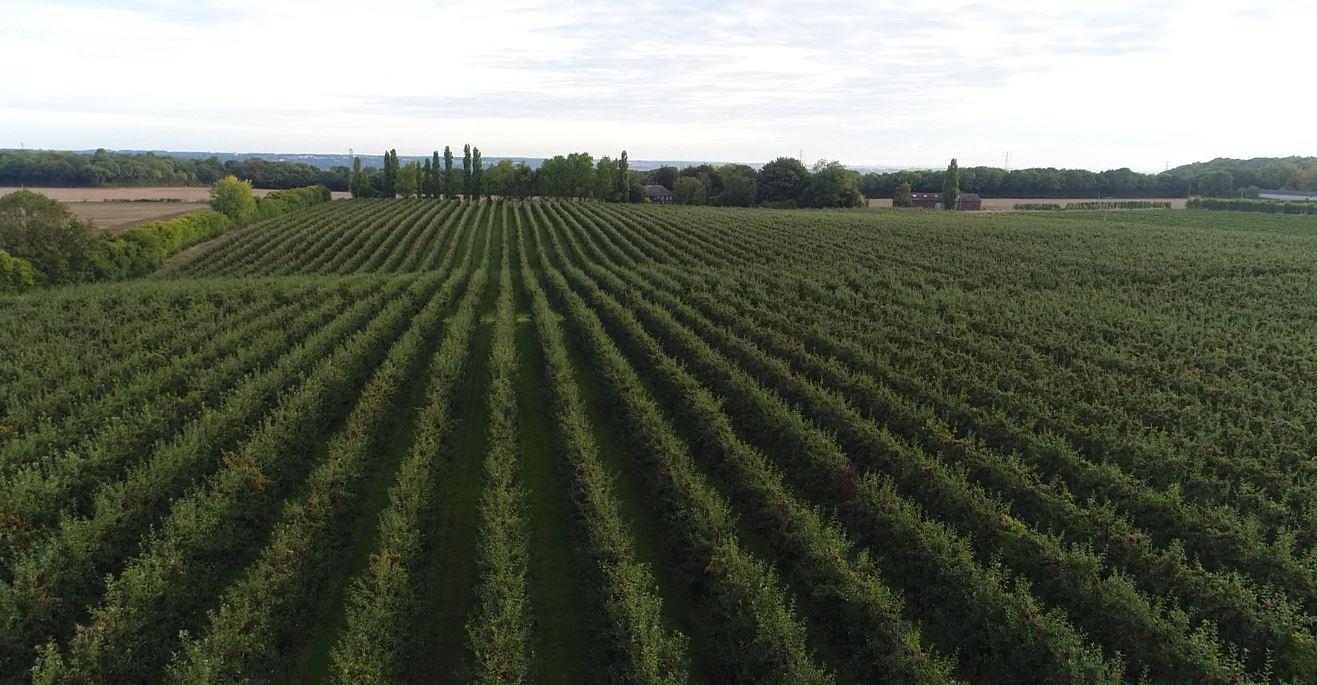 Our Farms 2.JPG