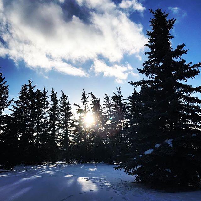 Sonnen Spaziergang in Calgary. Meine letzten Tage hier brechen an und ich glaube ich werde mit einem lachenden und einem weinenden Auge ins Flugzeug steigen... ☺️😥#calgary #walk #sunshine #instapic #canada #adventure #walkingonsunshine #park #journey #happy #germany #coming #back #soon #justdoit