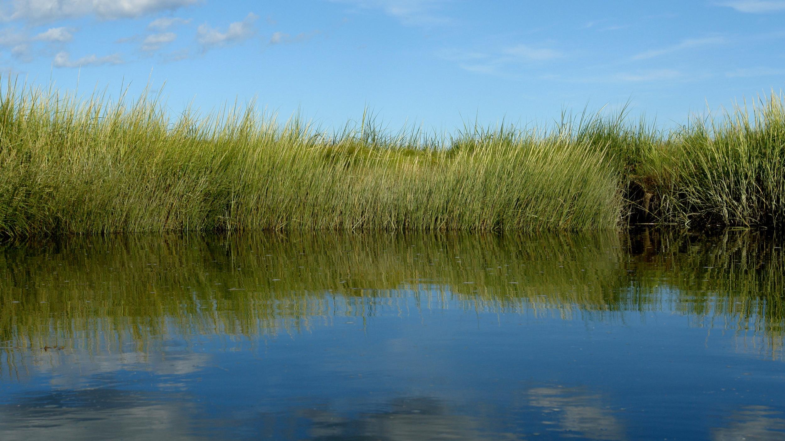 marsh_grass.jpg