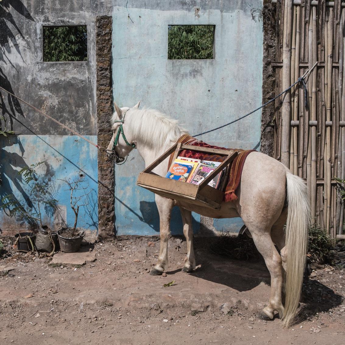Don Quixote of Literacy - By Putu Sayoga