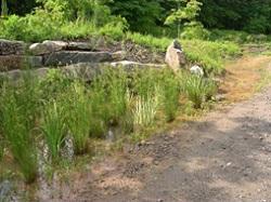 Pocket wetland   (Source:  LID Center )