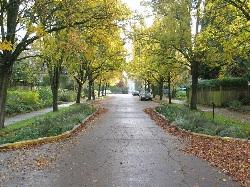 Street trees (Source:  LID Center )