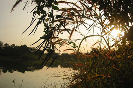 riverside-plants-at-srisatchanalai_4846349789_o.jpg