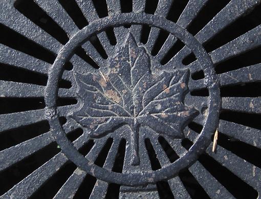 leaf-detail_4794962491_o.jpg