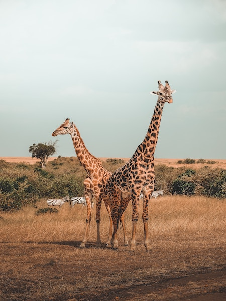 zambia africa a2d travel inspiration.jpg