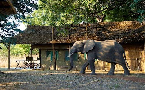 goliath safari camp zimbabwe a2d travel concierge.jpg