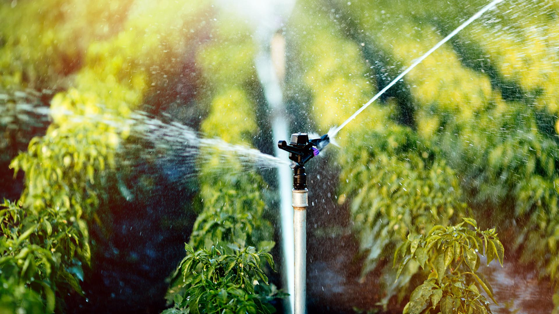 Irrigation system in operation in the region of Baixo Acaraú and Tabuleiro das Russas (CE)