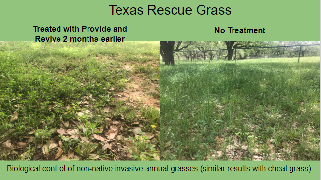 Texas Rescue Grass Pic.PNG