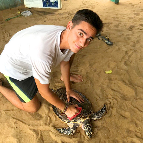 Niko+Turtle+750+750.jpg