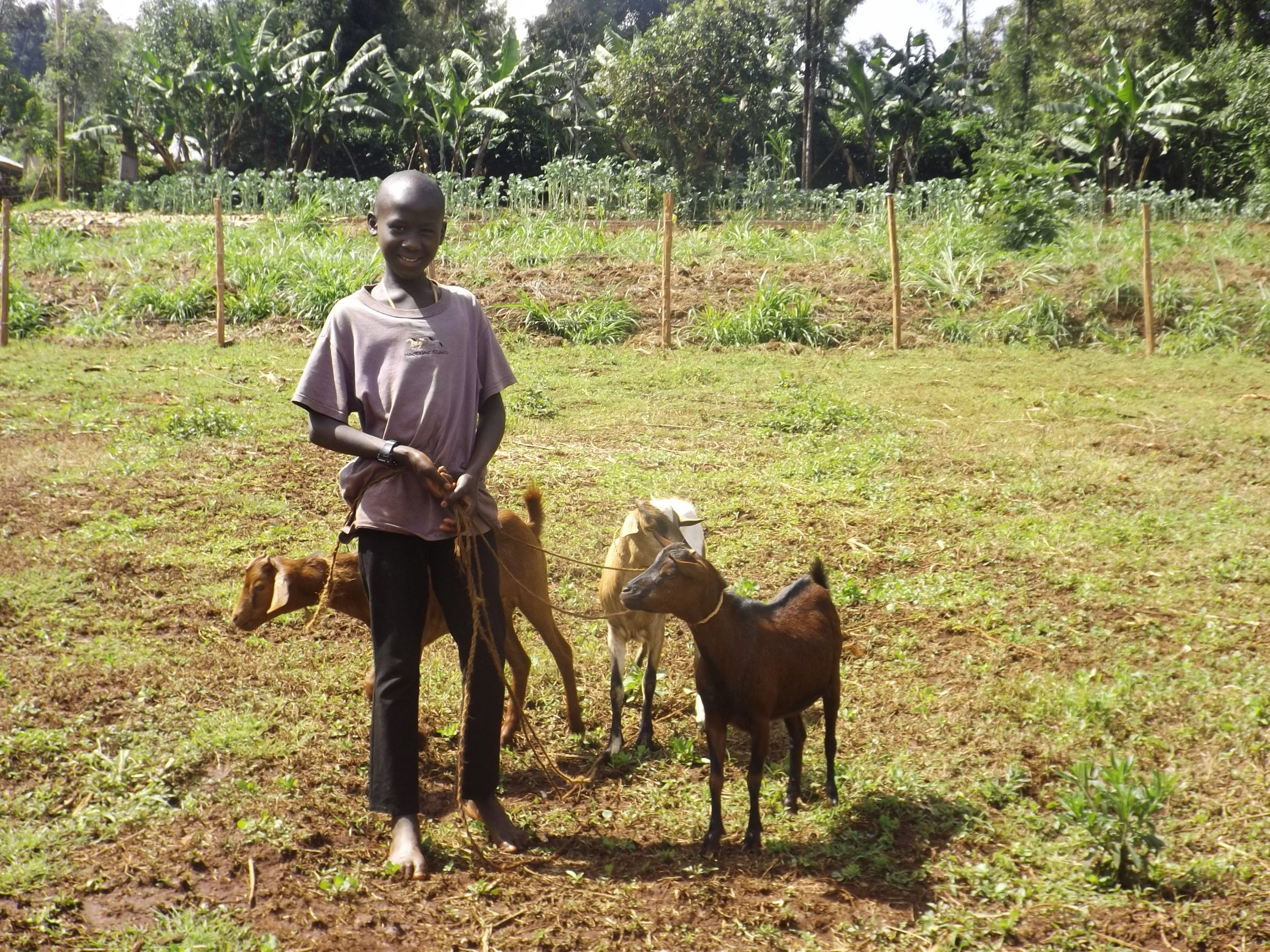 One of the photos in The Farm photo gallery. Orphan and former street child Wilfred takes Arrive goats for grazing.