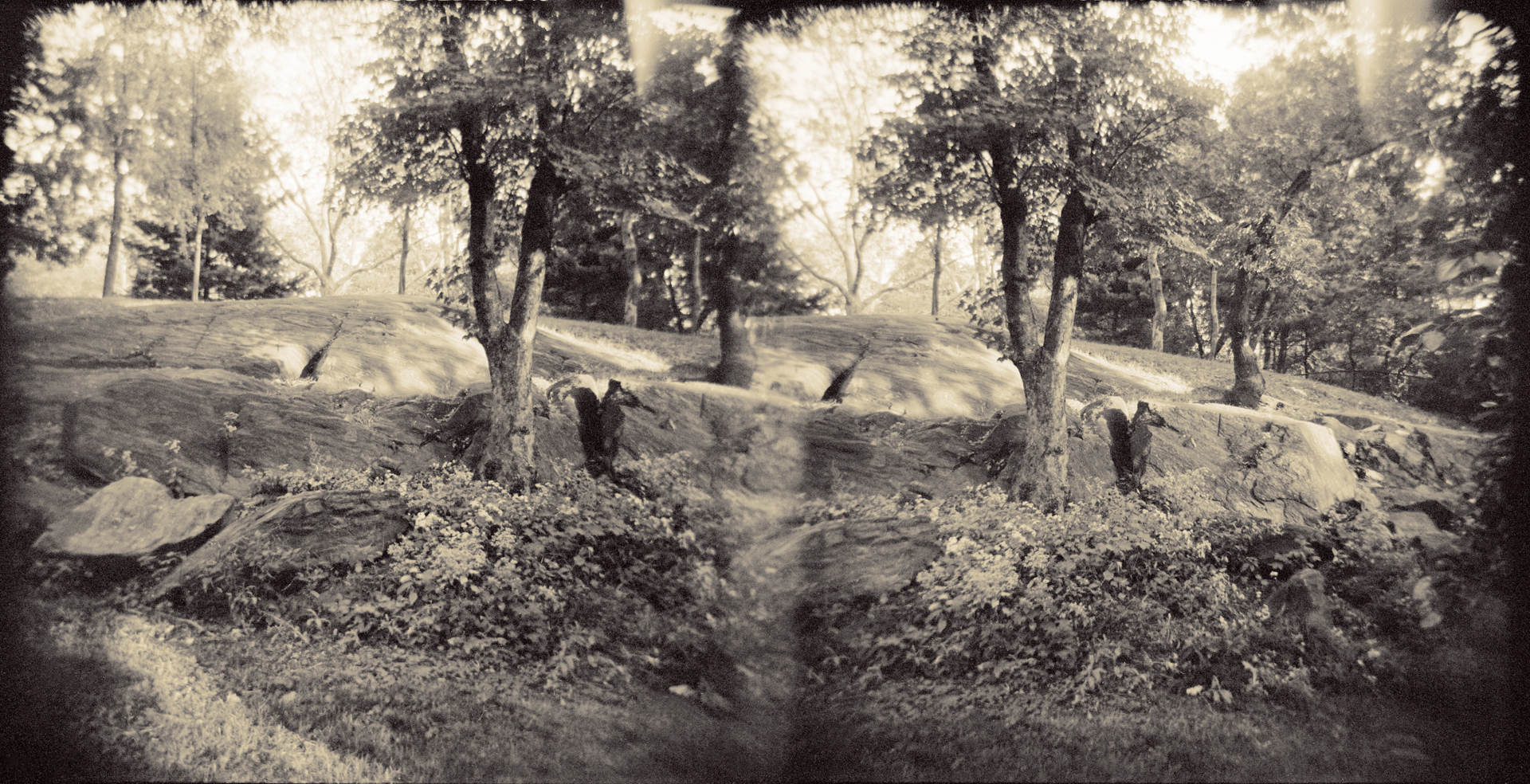 Landscape of Memory : lom 053   bleached silver print, framed  23 x 12cm, 1997