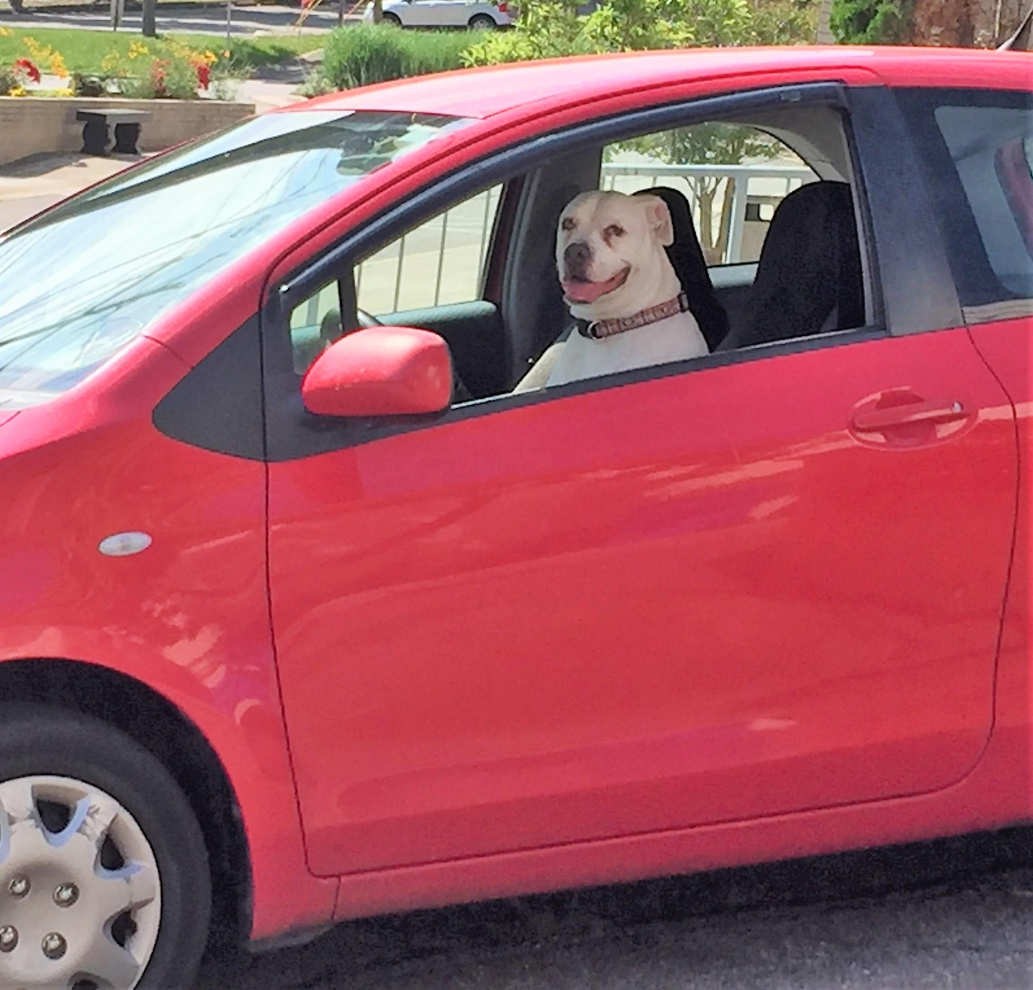 Canine Folk 3.jpg