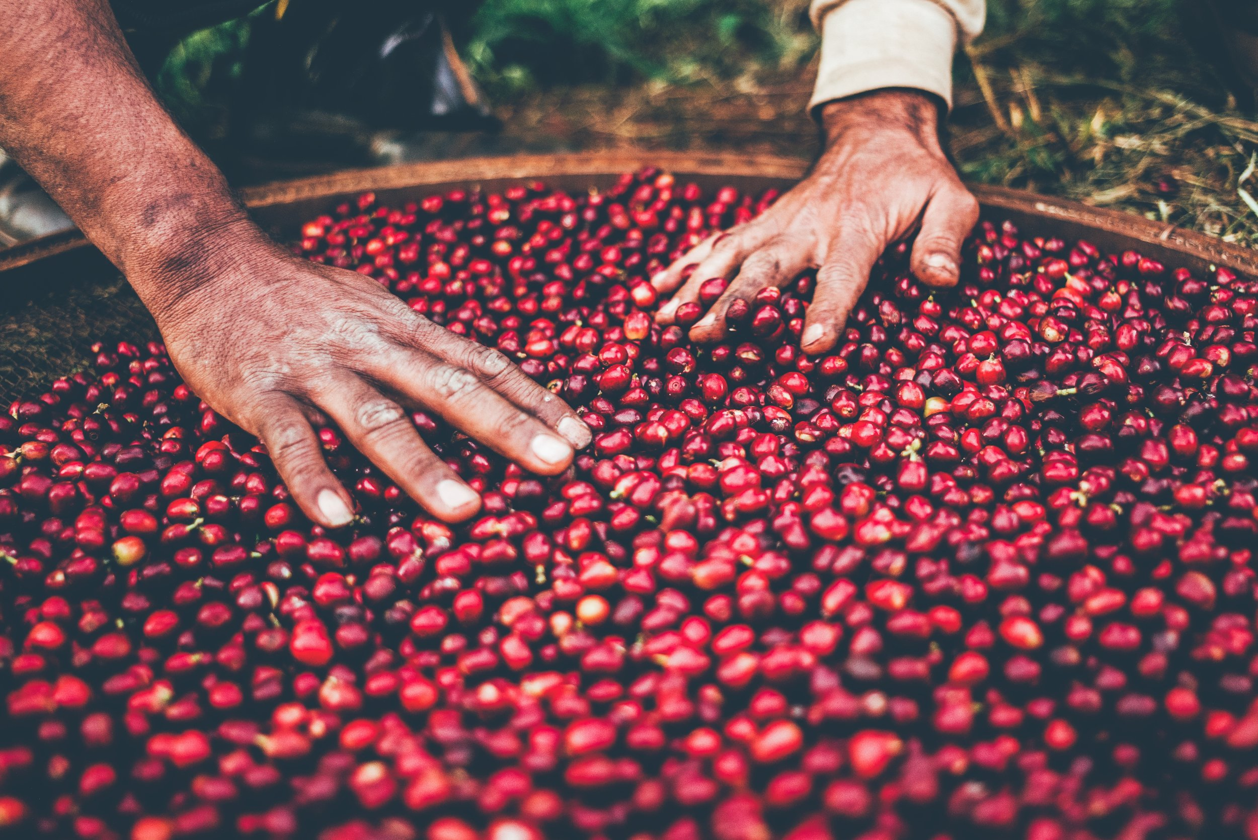 Who we ARE - Oro Group cares about all people devoted in coffee industry from seed to cup. Our goal is to achieve sustainability by building a strong relationship between coffee producers and the buyers not imposing any additional burdens such as third party commission.