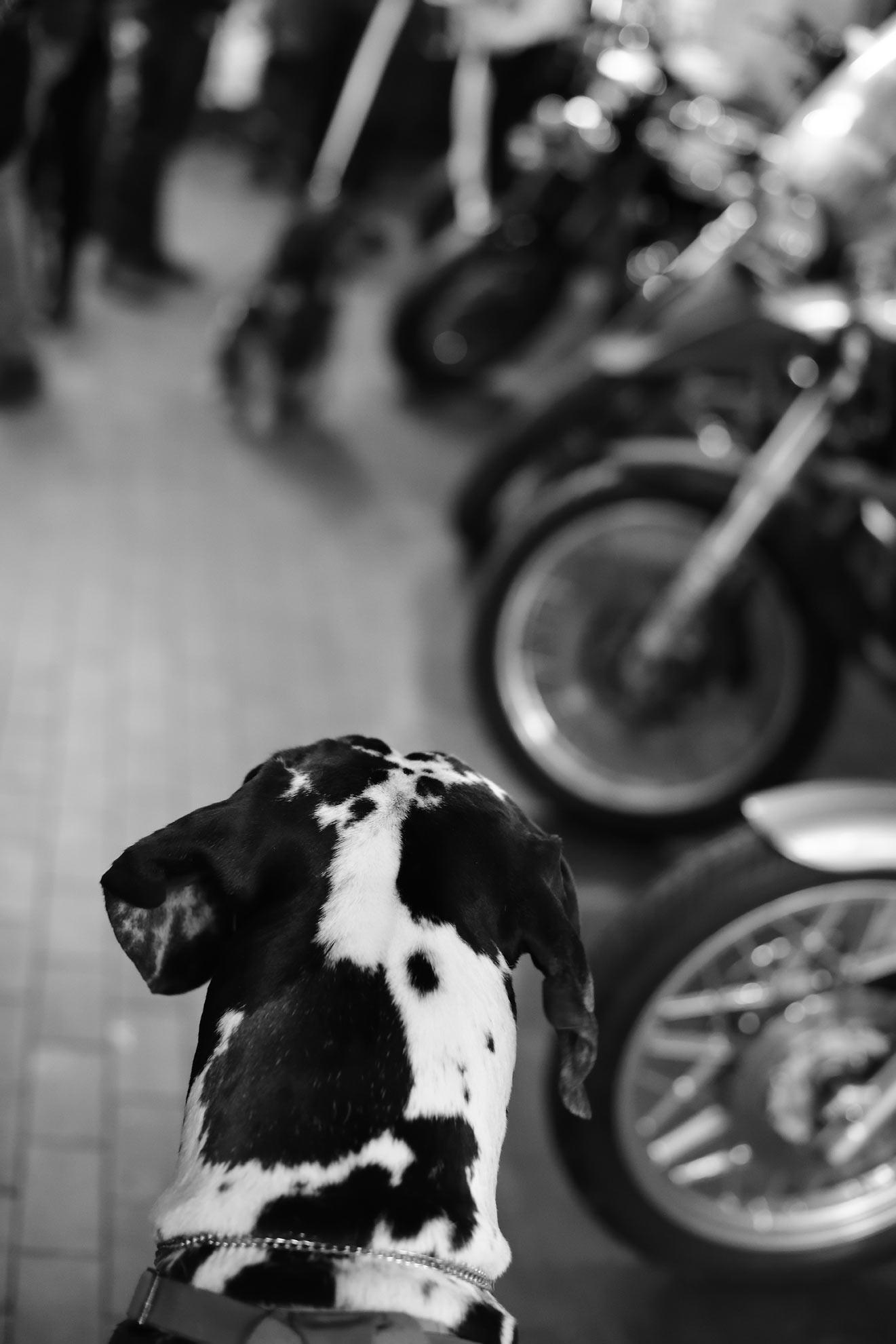 motomarket_007.jpg