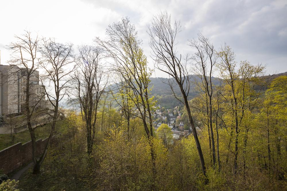 makler-heidelberg-wohnung-schloss497.jpg
