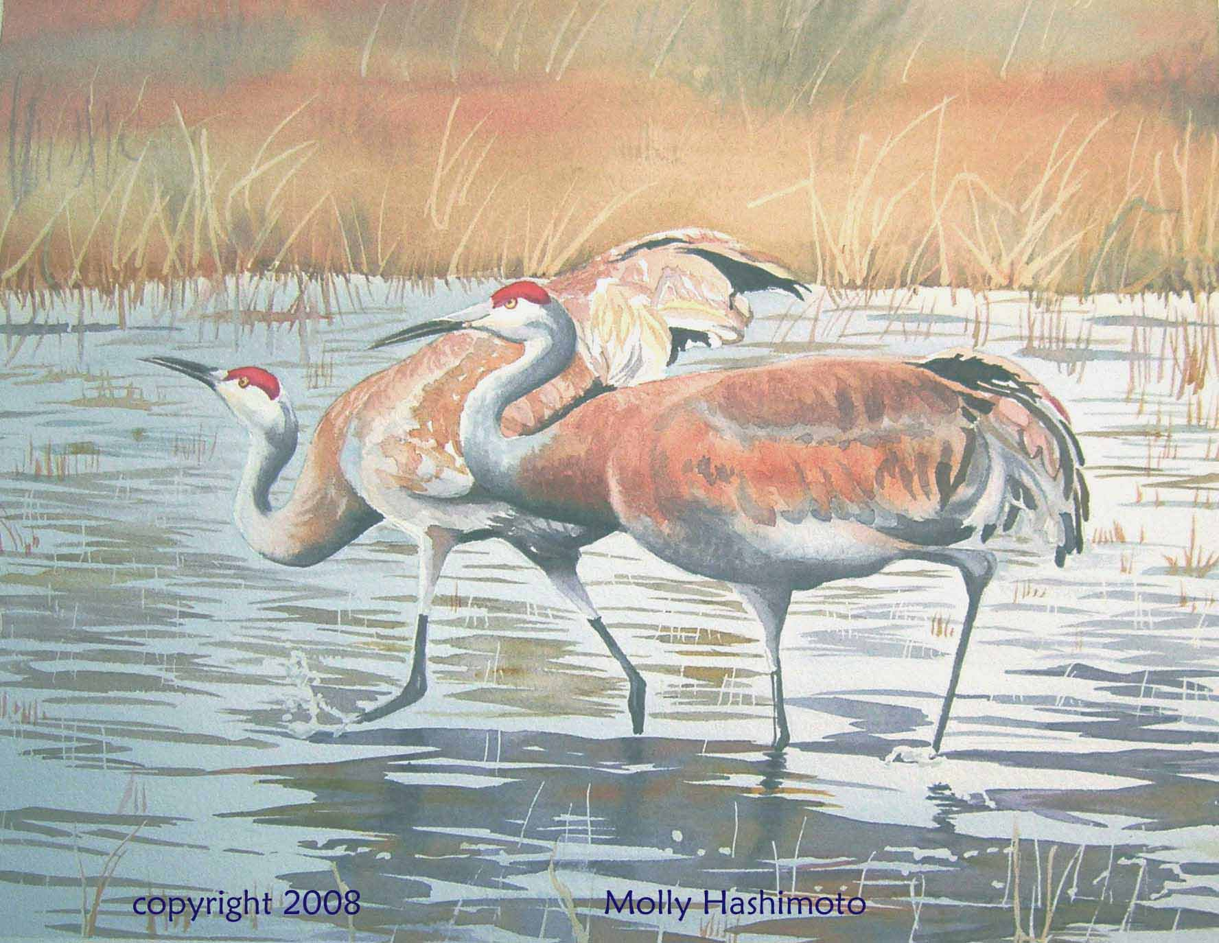 Sandhill Cranes, Yellowstone - Giclee Print $75