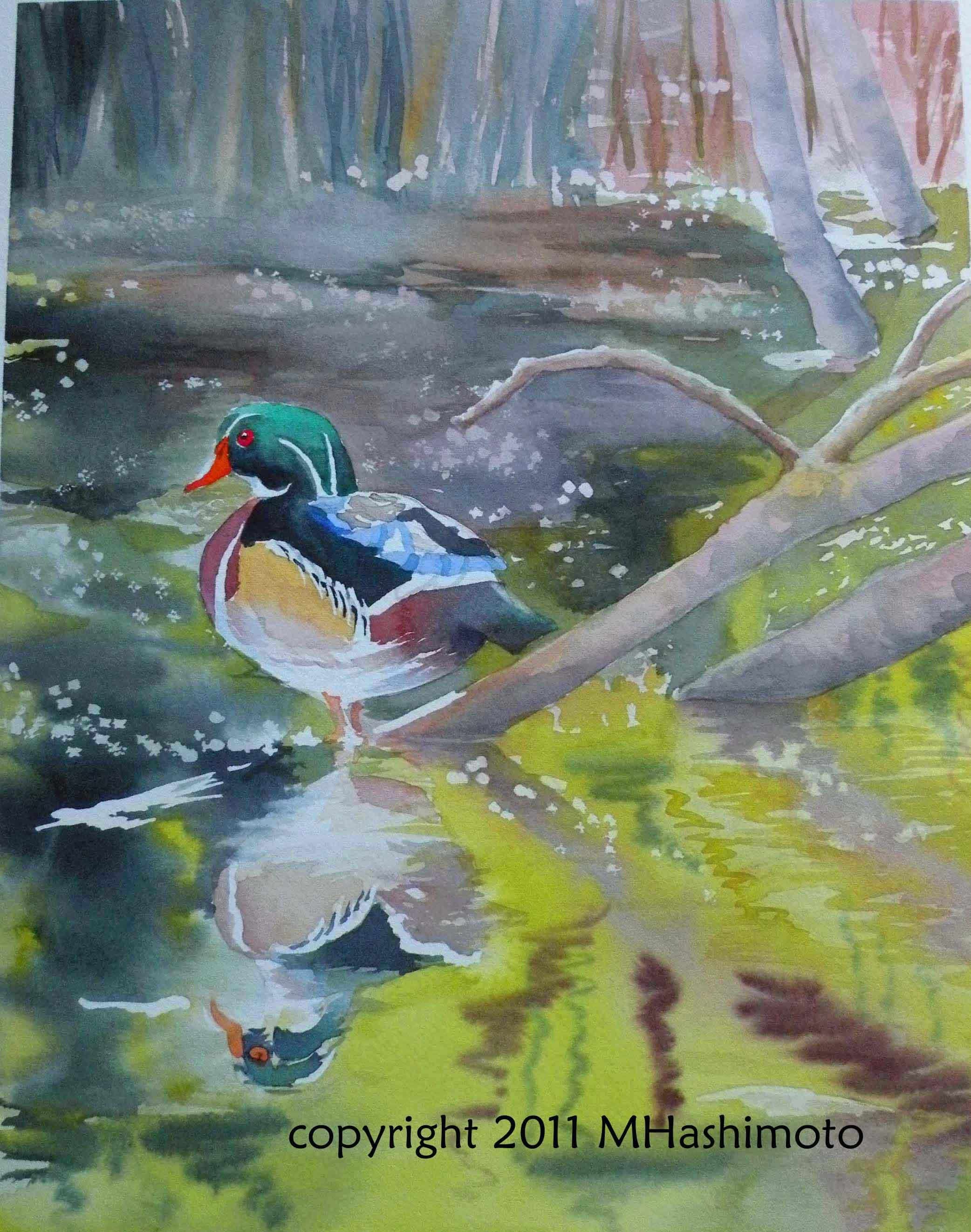 Wood Duck, Union Bay - Giclee Print $75