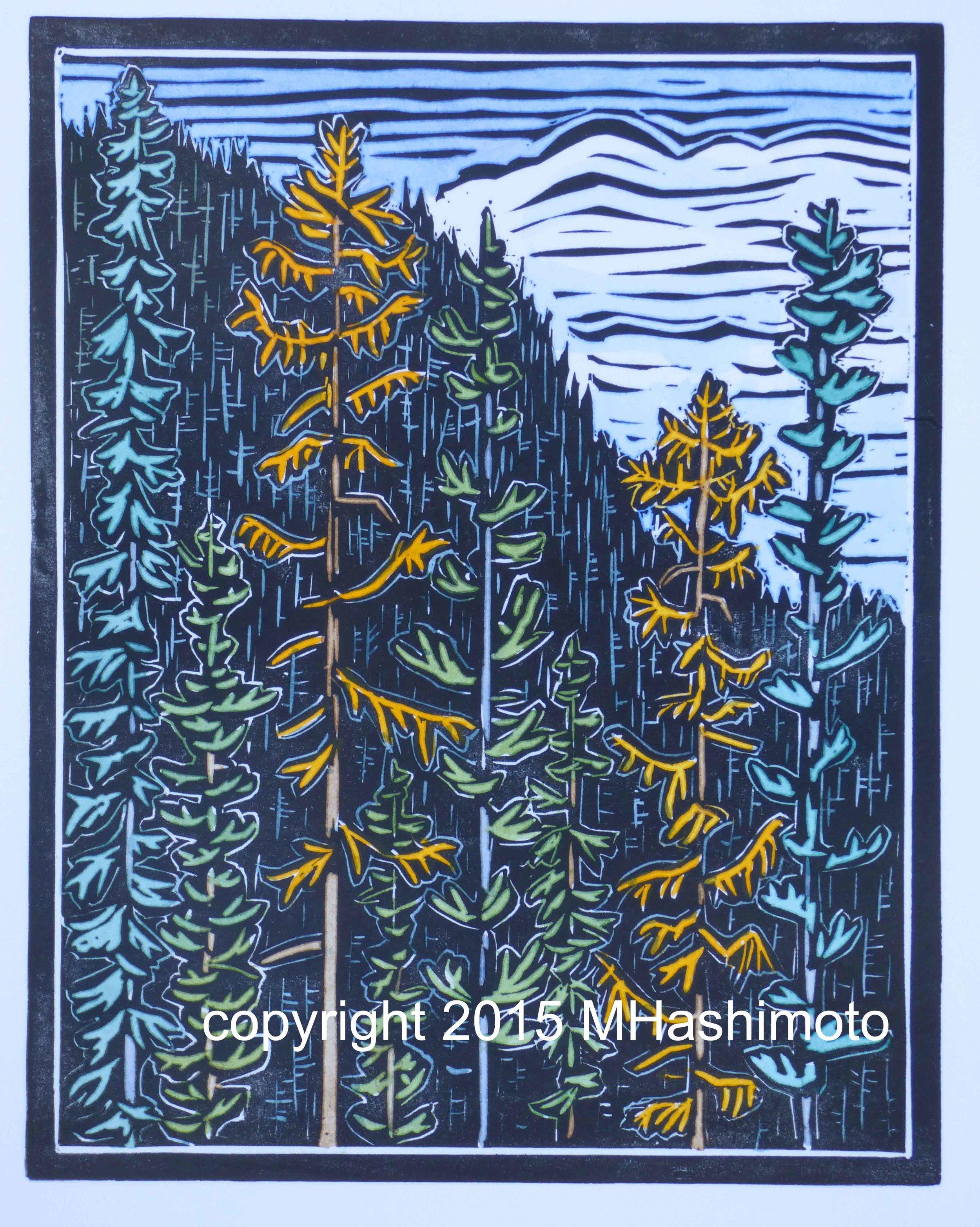 Larches, Spruce & Fir