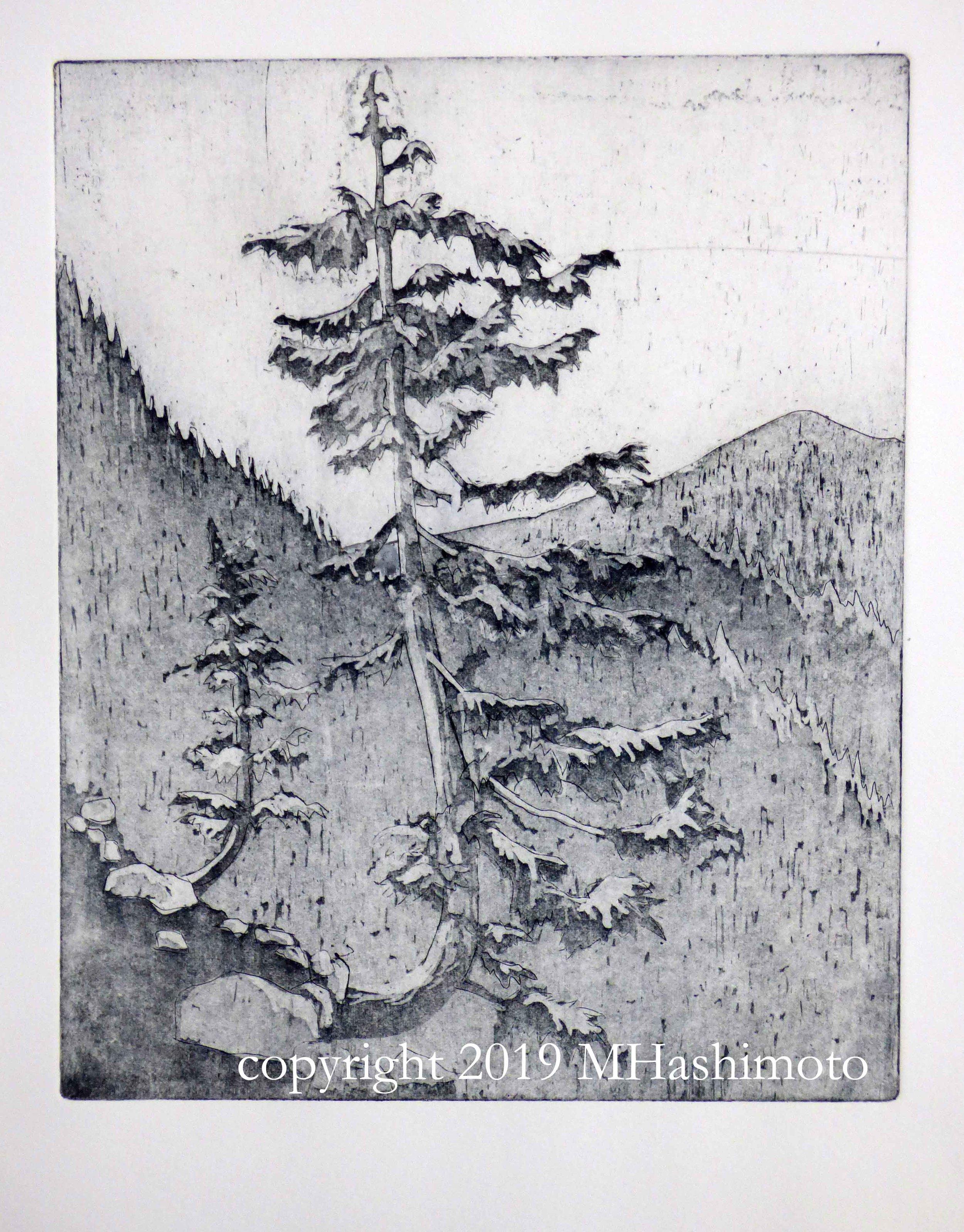 Mountain Hemlocks 2, $95