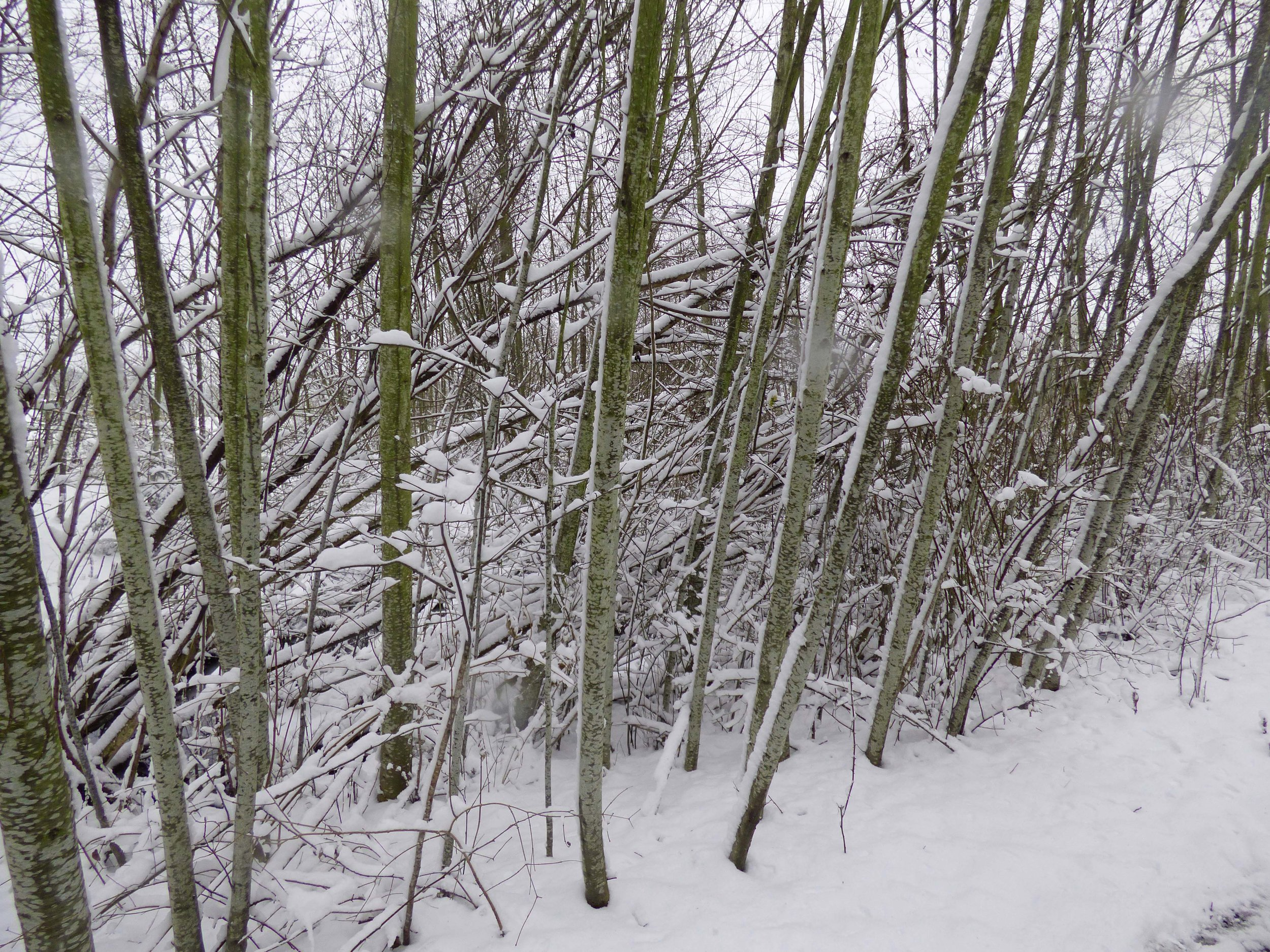 Snow texture 2.jpg