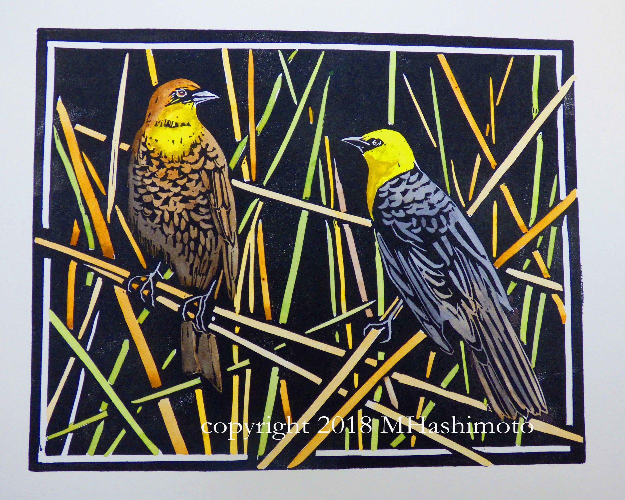 Yellow-headed Blackbird Pair