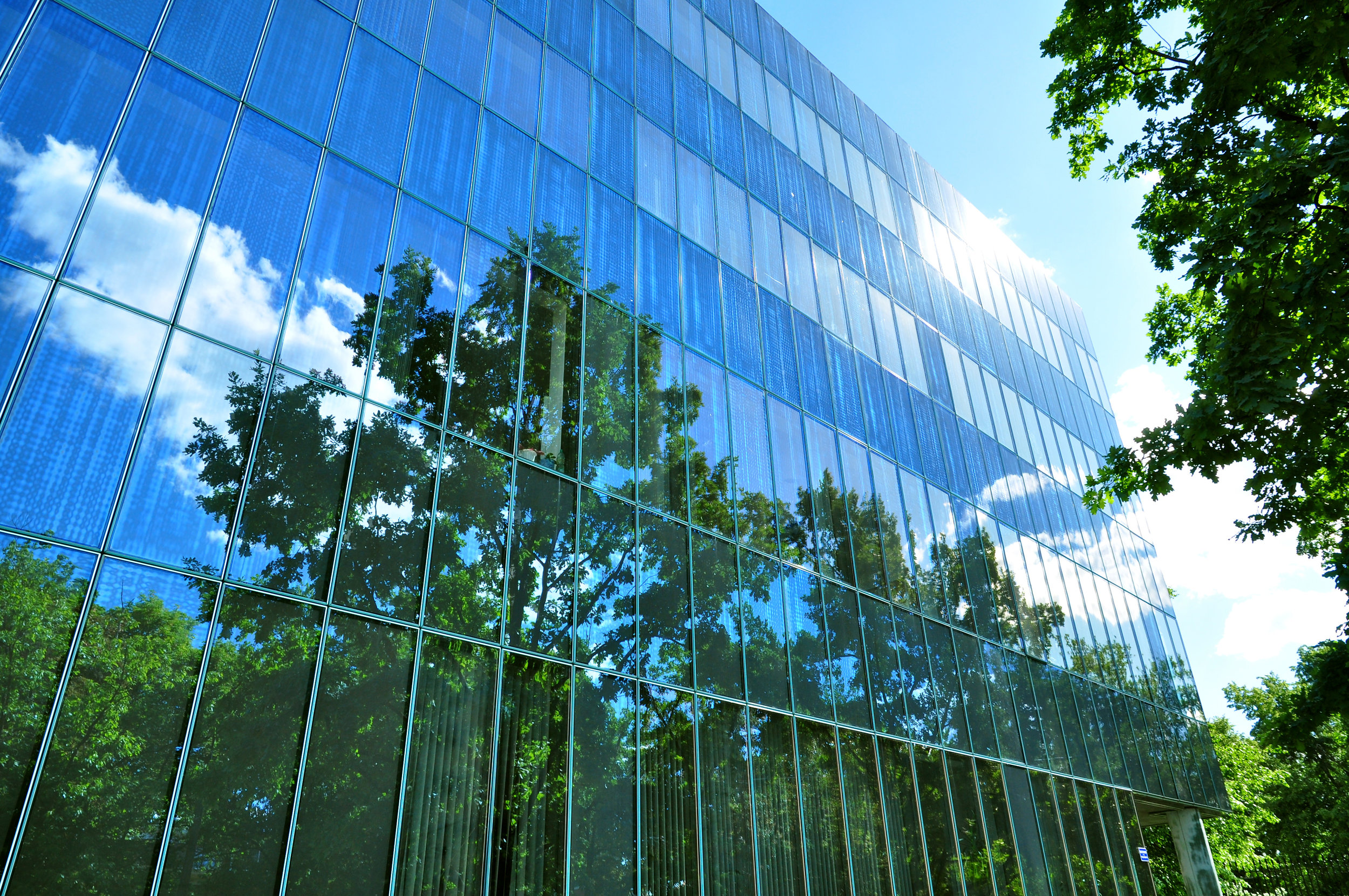 Building Trees 118611886.jpg
