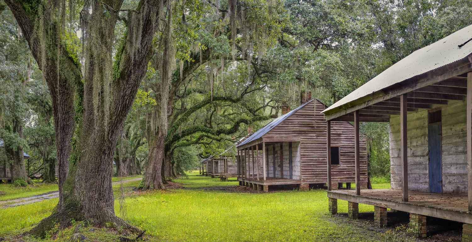 Cabins and oaks, upriver (east) side of quarters