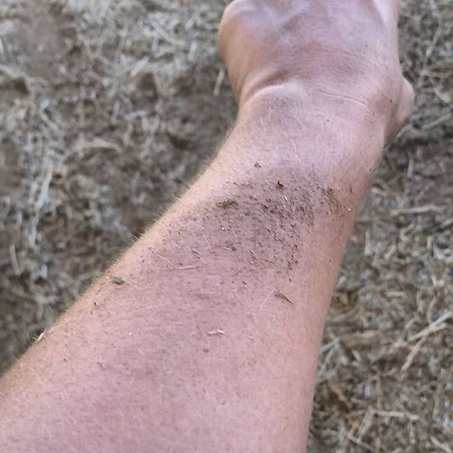 What your arm looks like after it has been licked. By a horse.
