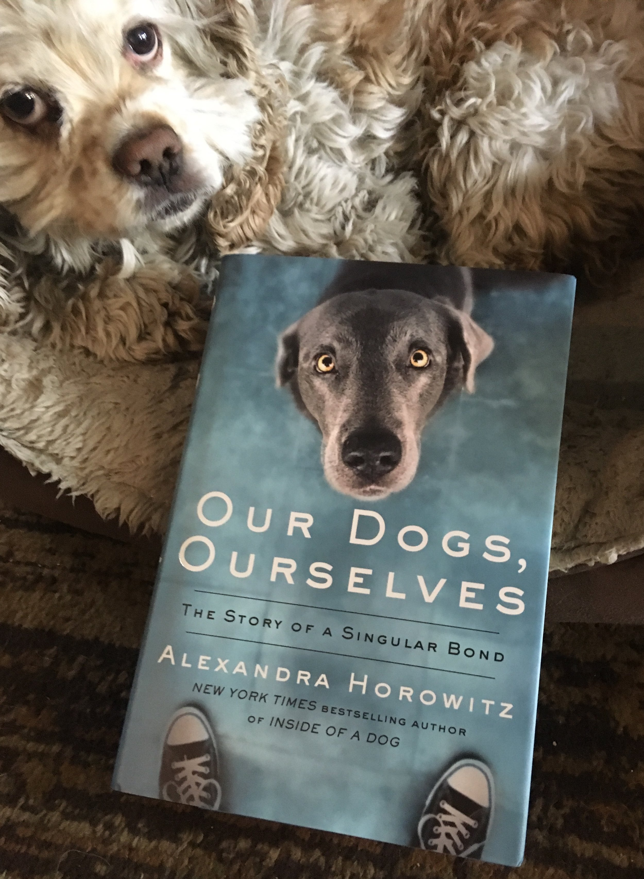 Our Dogs, Ourselves -