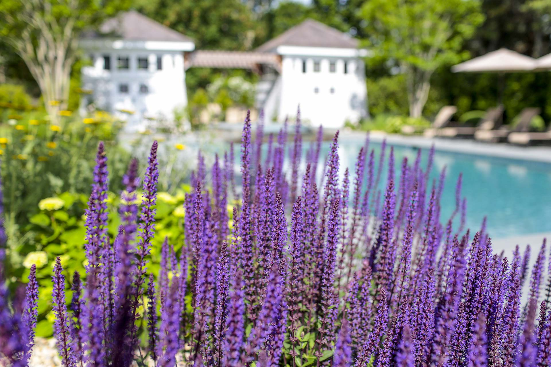 Well-designed plantings can offer functional and aesthetic value to any property.
