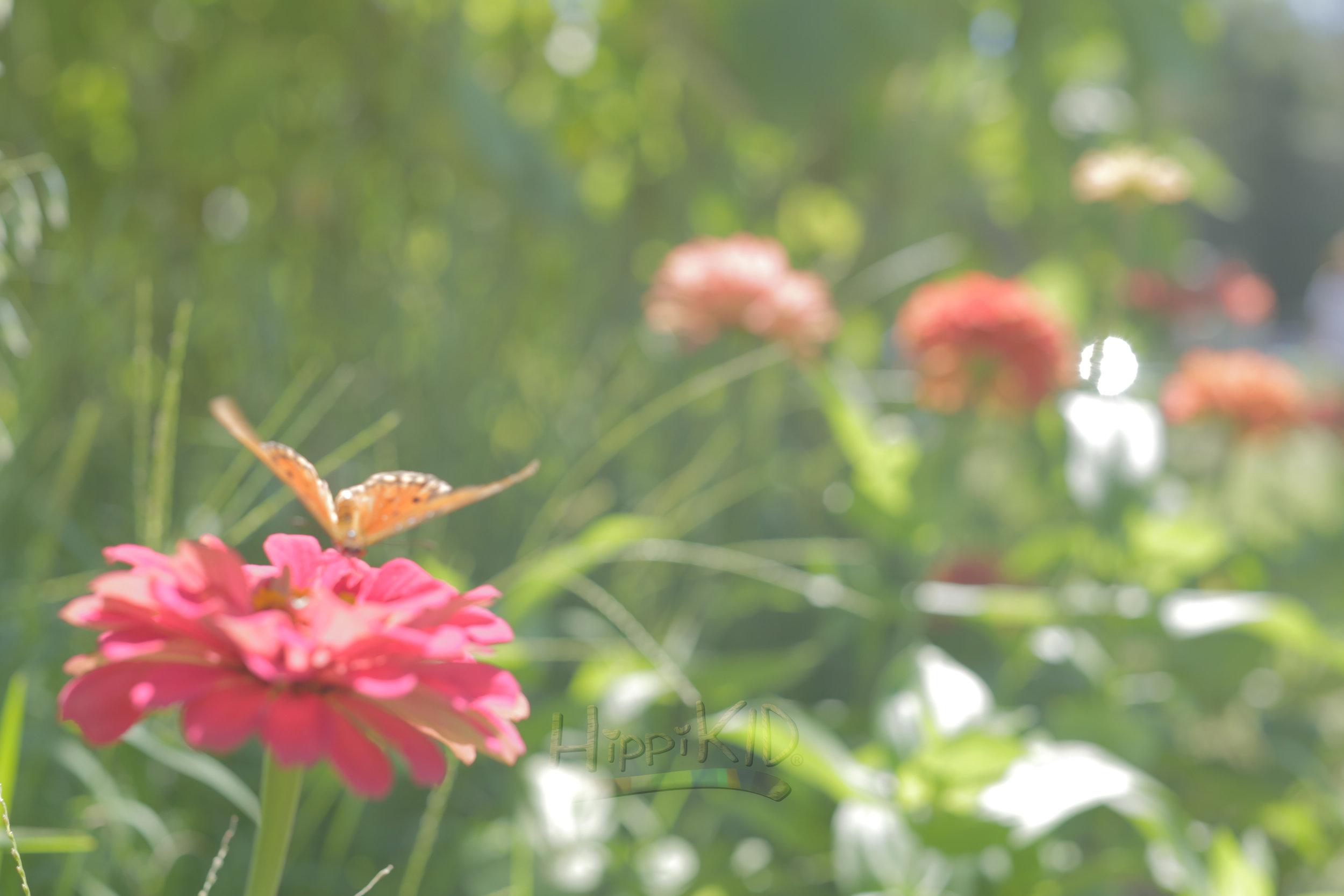 9U8A9073_butterfly-flower_wm.jpg