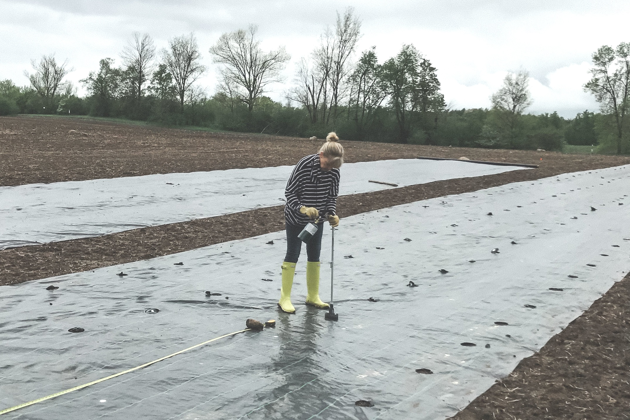 """marking & creating holes - 200 ft long strips needed to be carefully marked to accommodate the varying size of French and English lavender. After holes are marked a propane cane burner melts perfect 4"""" holes that will receive the baby plant."""