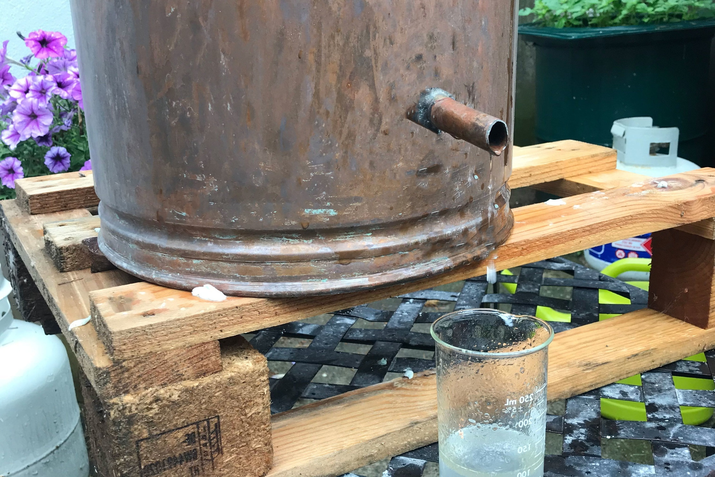 Distilling - This summer 2018 we did our first distillation for lavender essential oil!