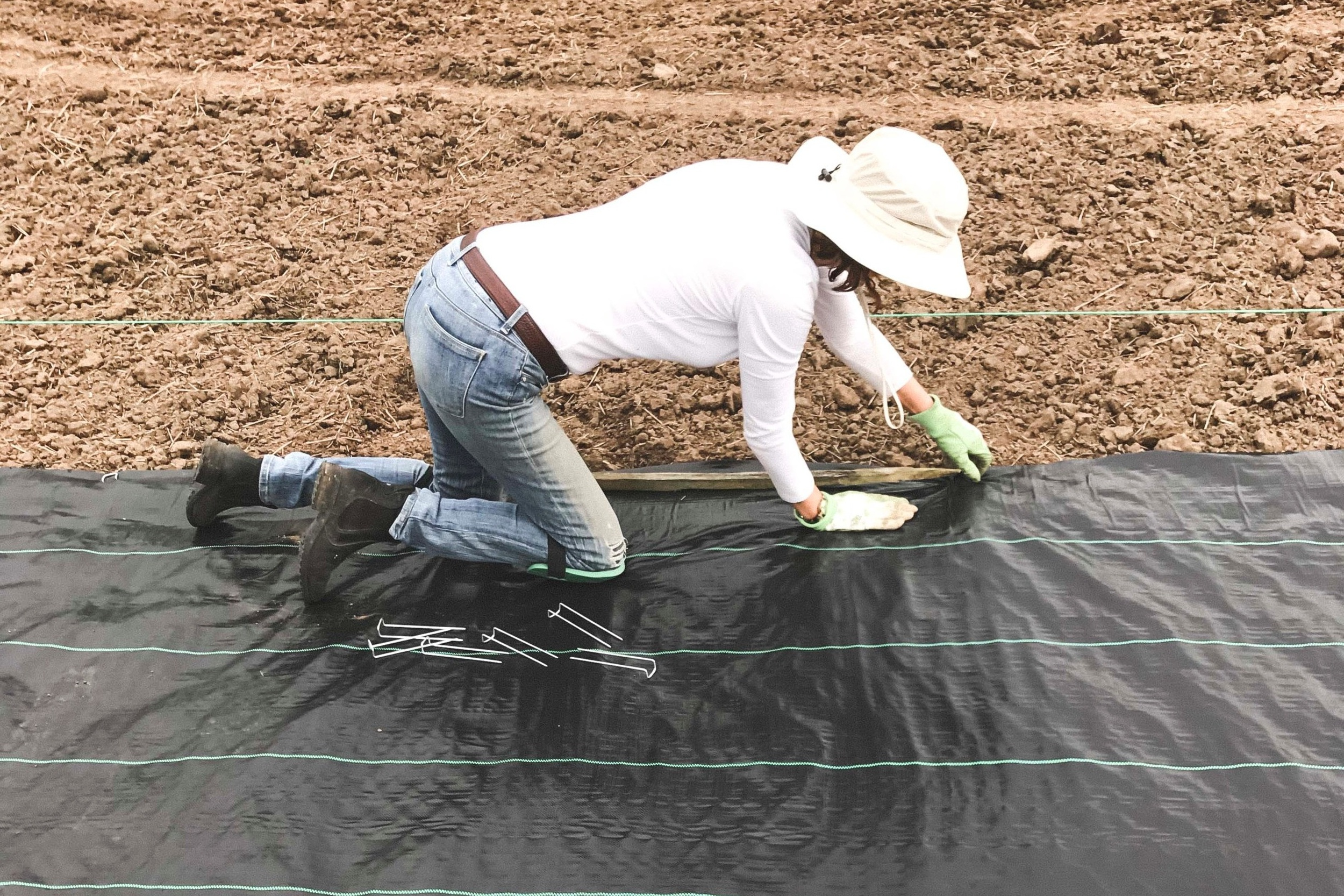 Laying greenhouse cloth - Water and air permeable black woven cloth is laid down to prevent weeds from growing. Of course, the field had to be harrowed first and all the rocks hand picked out!
