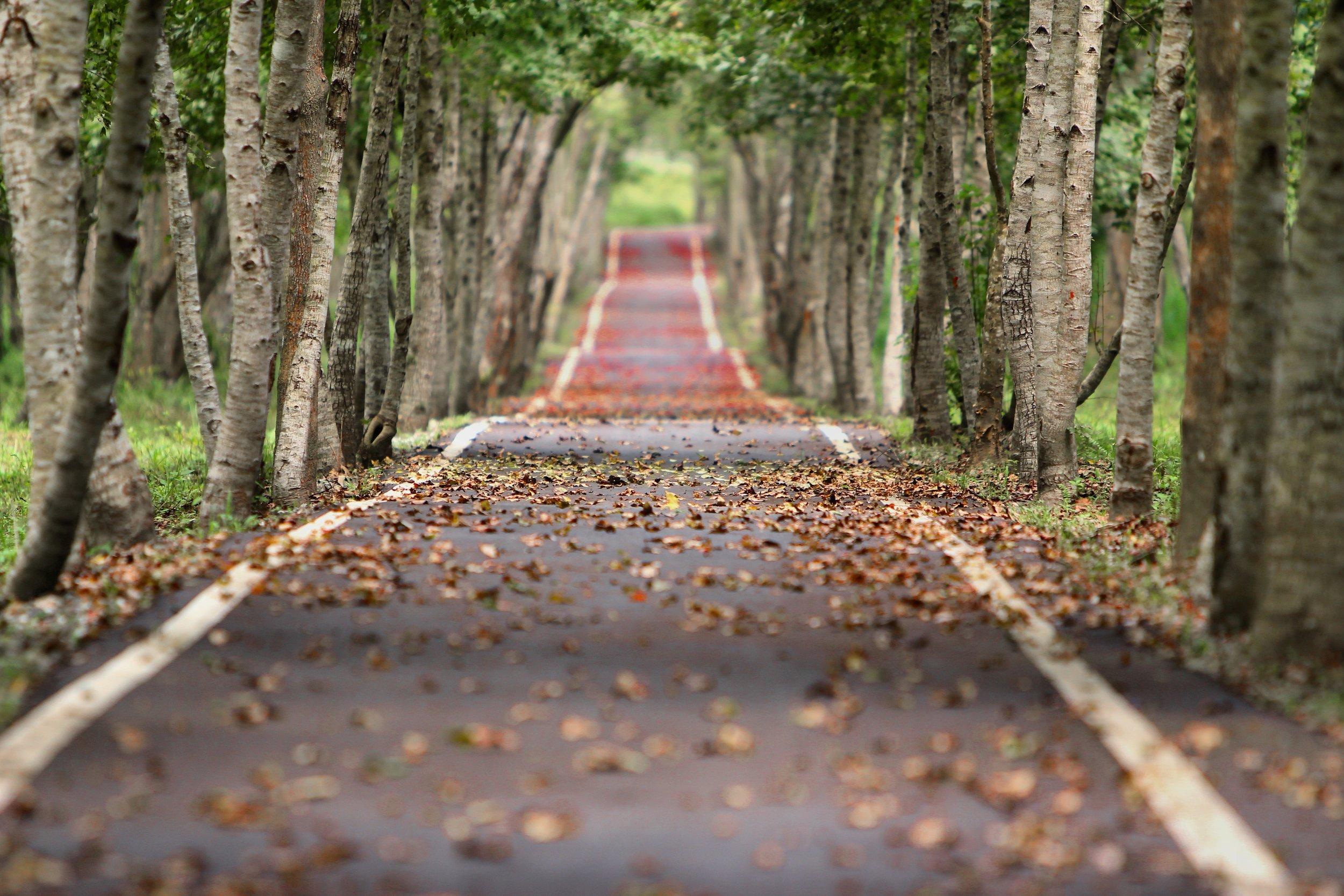 blur-branches-foliage-38537.jpg