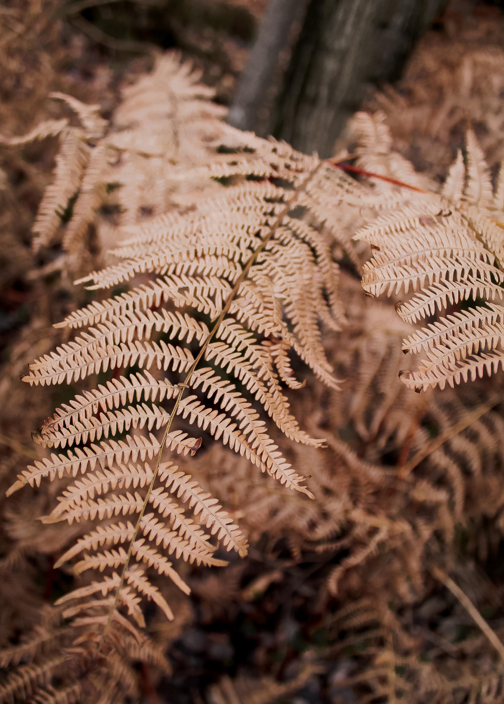 Boho Nature by paperheartpolaroids (2).jpg