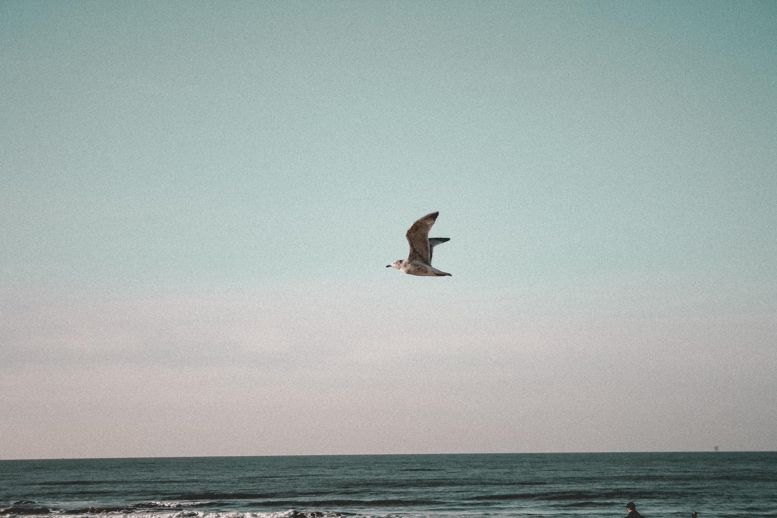 Vintage Beach Life by paperheartpolaroids (16).jpg