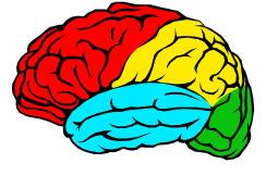 brain-2180593_1920 (1).jpg