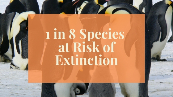 Blog Post Image One in Eight Species Risk Extinction.jpg