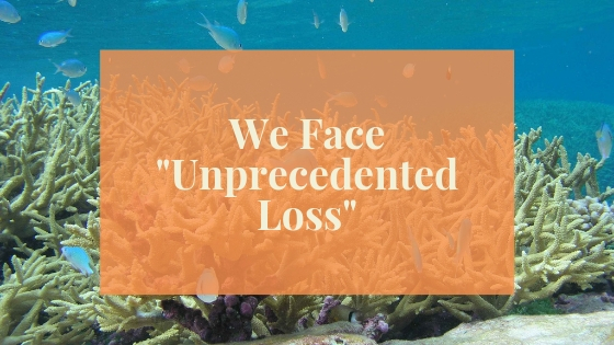 Blog Post Image Unprecedented Loss Coral Reef.jpg