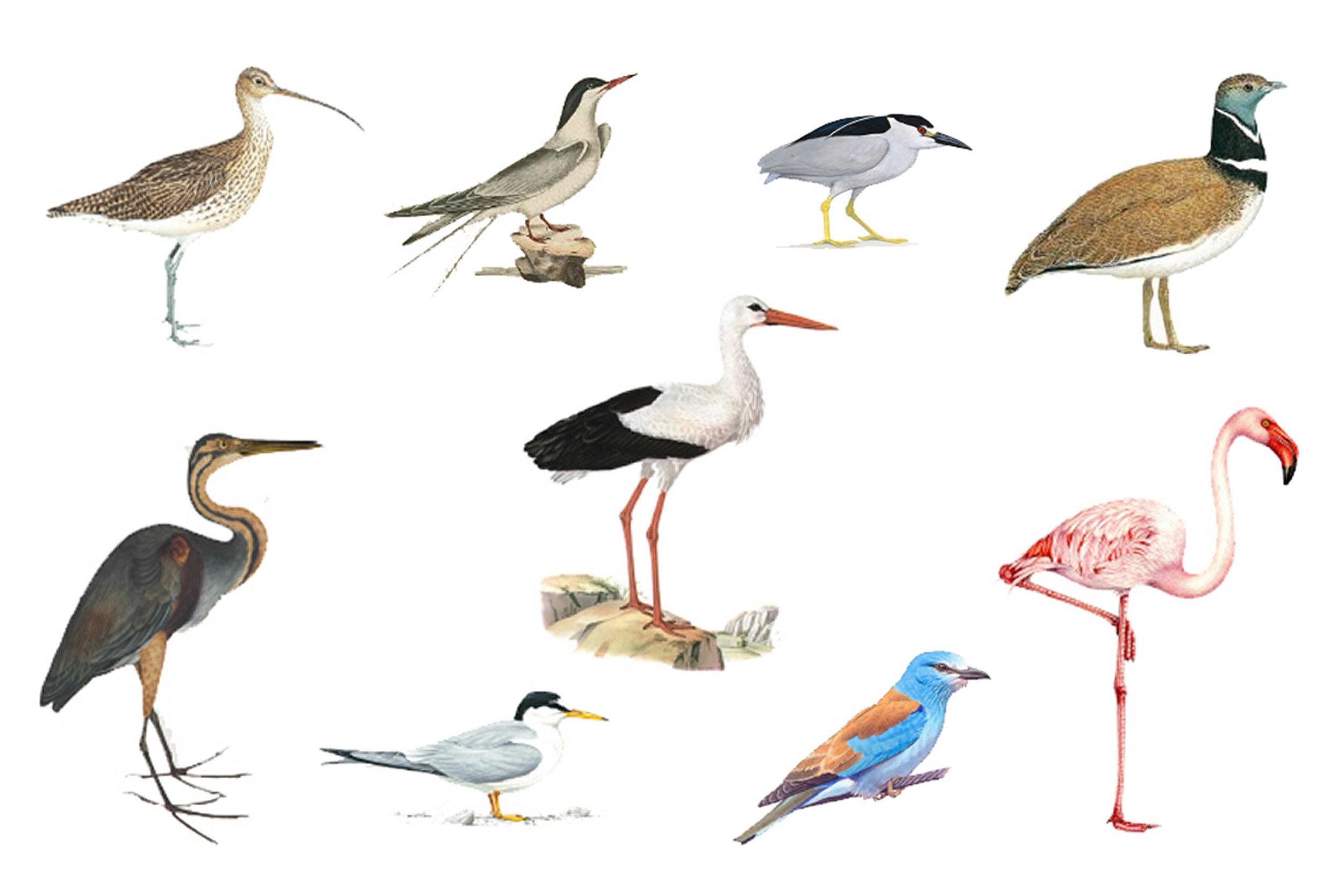 Migropoli_Birds.jpg