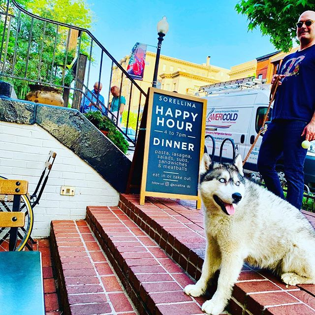 we love our #dupontcircle regulars and yes we are animal 🐕 🐈 friendly (yes even humans ...!) come say hi if you're passing @sorellina_dc by this friday night, have a great weekend!