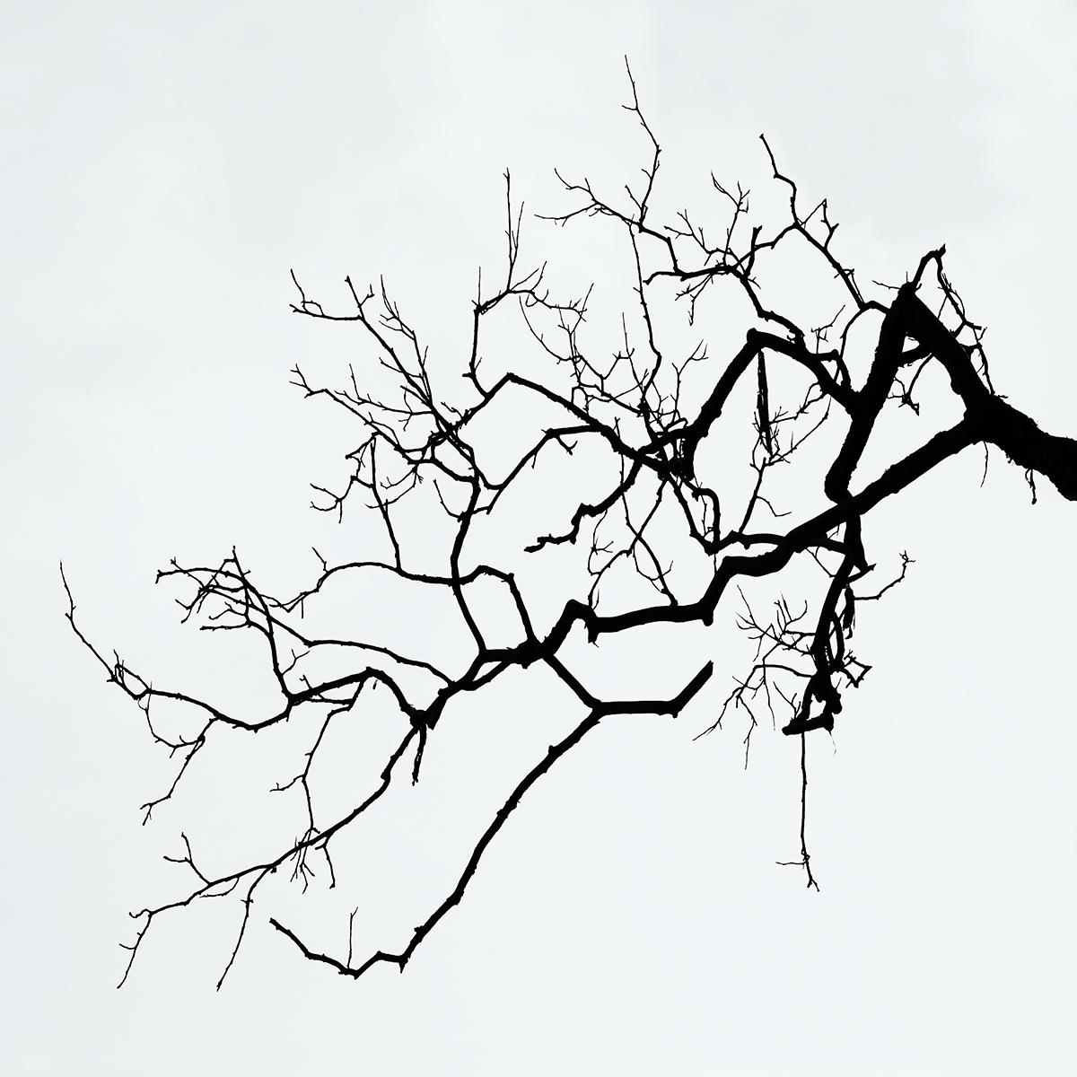 old_branch_10x10_highres.jpg